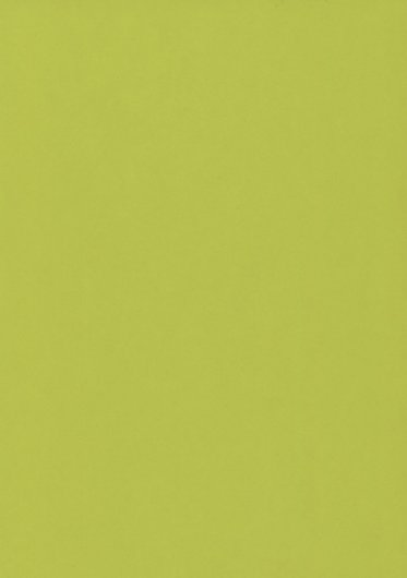 lime gloss wetwall